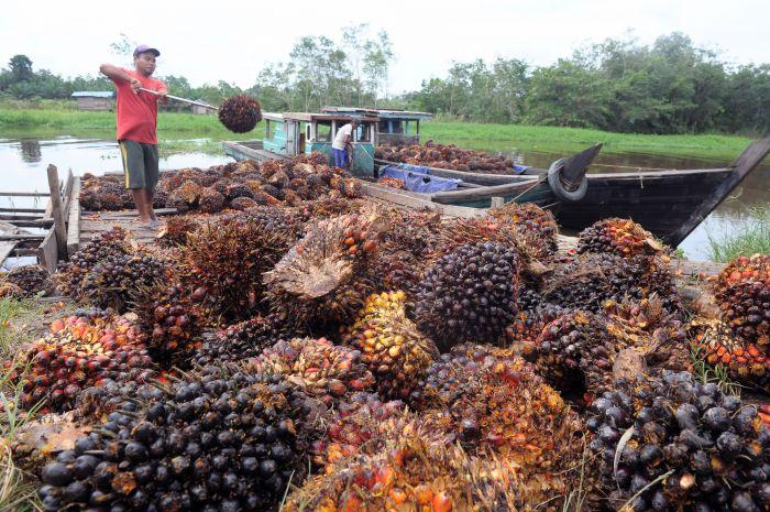 ekspor-bungkil-sawit