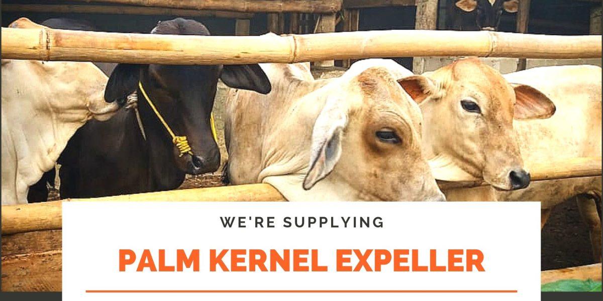 supplying palm kernel expeller