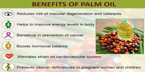 Benefits-of-Palm-Oil